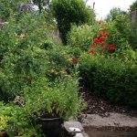 bristol overgrown garden