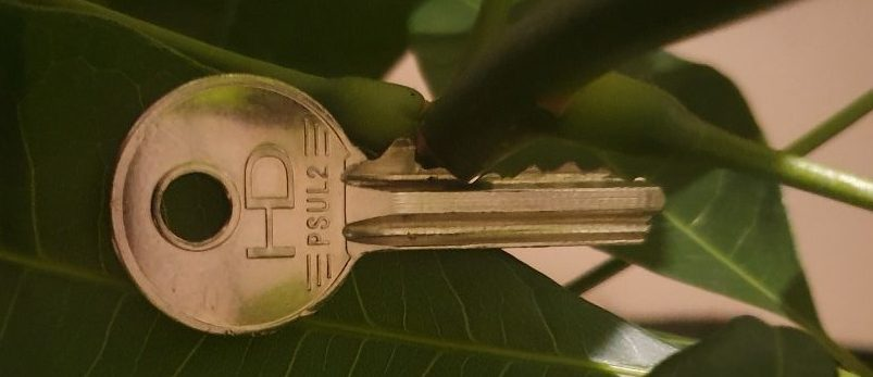 lock key on plant